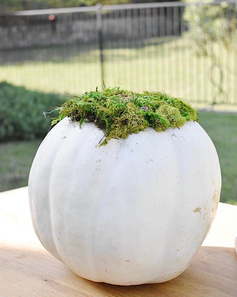 how to make a succlent pumpkin