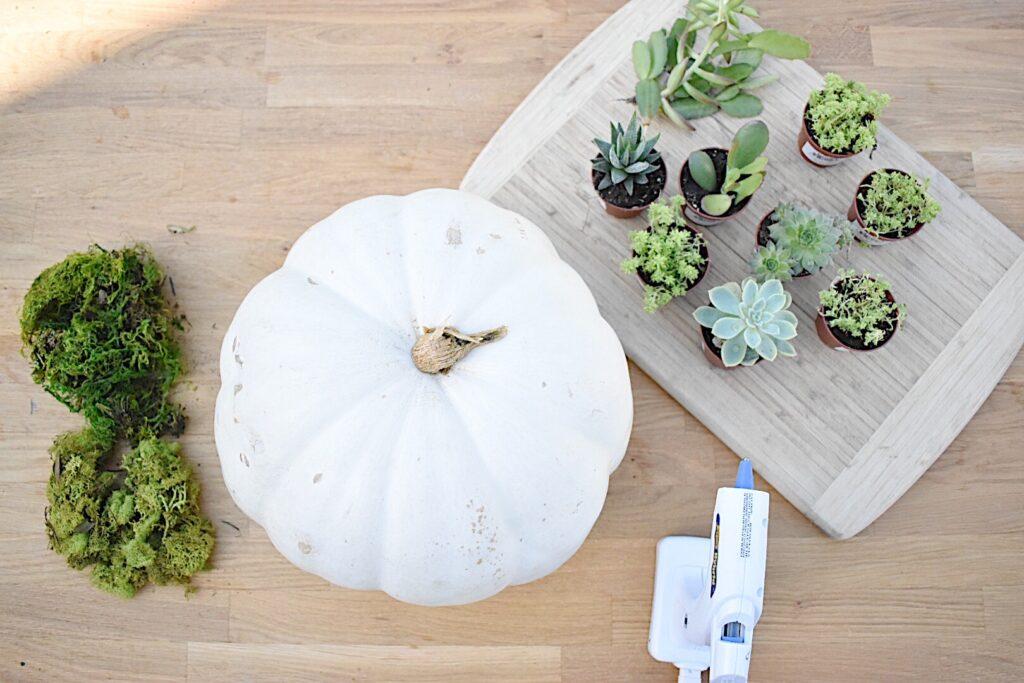 supplies to make a succulent pumpkin