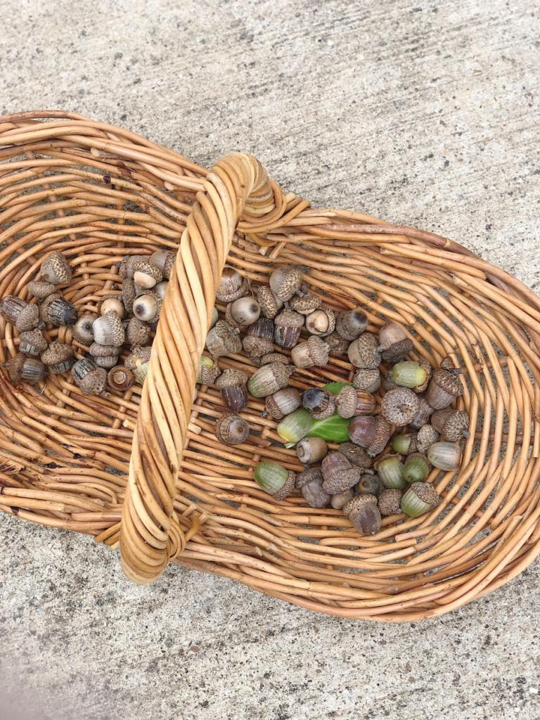wicker basket of acorns