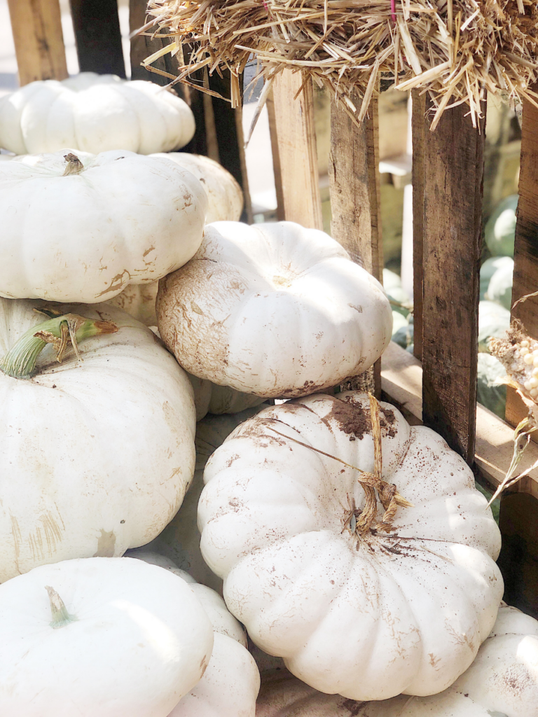 large stack of white heirloom pumpkins